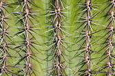 Very dangerous, detail of cactus — Stock Photo