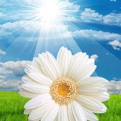 Flower Nature Sun — Stock Photo