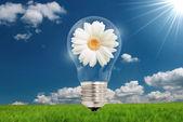 Ideia de flores de bulbo — Fotografia Stock