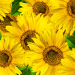 Sunflowers — Stock Photo #2442039