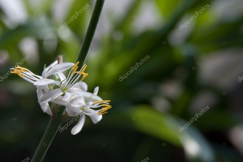 White flower closeup — Stock Photo #2443773