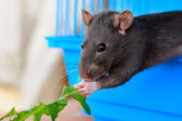 Mouse in the house — Stock Photo