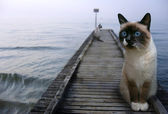Cats sentinels — Stock Photo