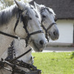 Horses — Stock Photo #2531005