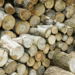Logs — Stock Photo #2600246