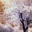 infrared tree — Stock Photo