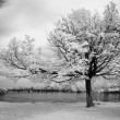 Infrared Tree — Stock Photo #2601857