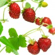 Royalty-Free Stock Photo: Wild strawberries.