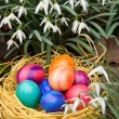 Royalty-Free Stock Photo: Easter eggs and snowdrops.
