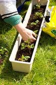 Gardening. — Stock Photo