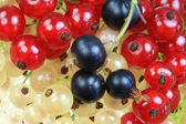 White, black and red currants. — Stock Photo