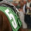 Close Up of Thoroughbred Horse — ストック写真