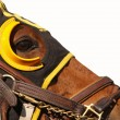 Face of Race Horse with Copy Space - Stock Photo