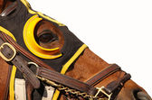 Cara de caballo de carreras con espacio de copia — Foto de Stock