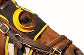 参加比赛的马匹与副本空间的脸 — 图库照片