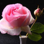 kwiaty — Zdjęcie stockowe #2679767