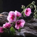 kwiaty — Zdjęcie stockowe #2679827