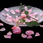 kwiaty — Zdjęcie stockowe #2679875