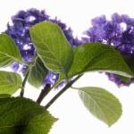 kwiaty — Zdjęcie stockowe #2680209