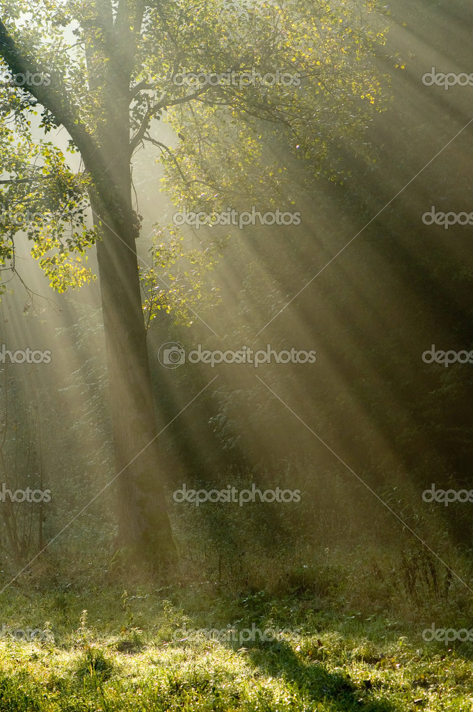 A tree with beautiful sunrays — Stock Photo #2418512