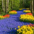 Lane of flowers - Stock Photo