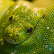 Royalty-Free Stock Photo: Green snake