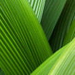 Royalty-Free Stock Photo: Abstract palm leafs