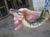 Cobra em uma mão — Foto Stock