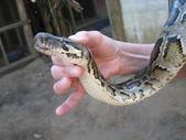 Snake in een hand — Stockfoto