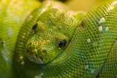 Grön orm — Stockfoto