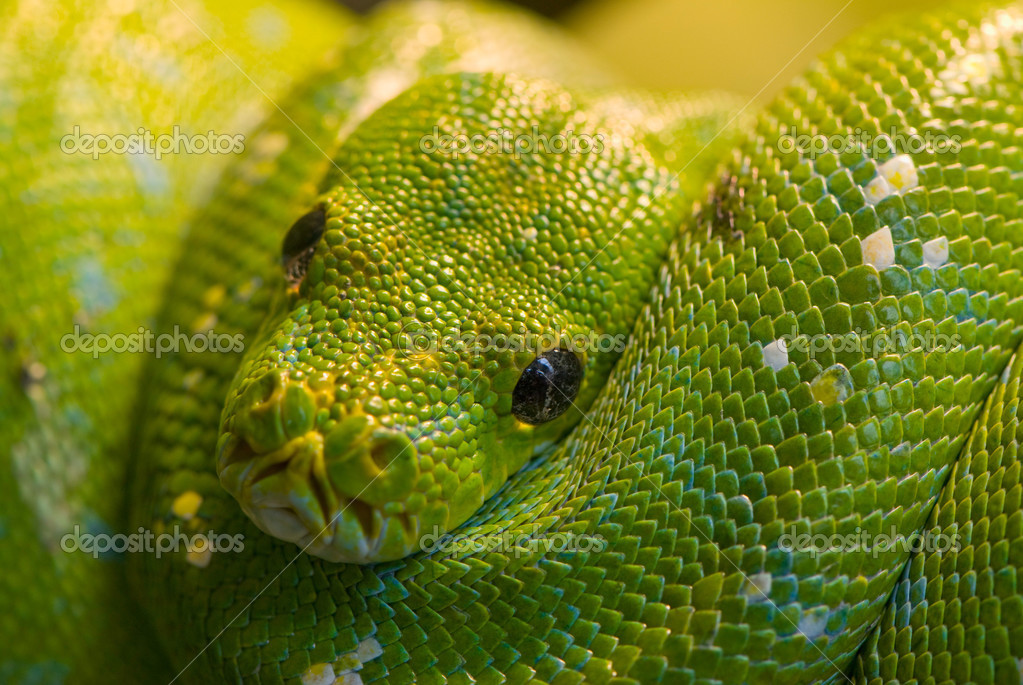A resting green snake — Stock Photo #2489852