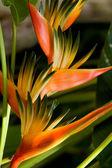 Asiatiska blommor — Stockfoto