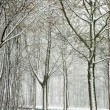Winter forest - Stockfoto