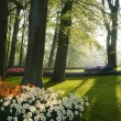 The park keukenhof in backlight — Stock Photo