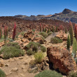 Stock Photo: Panorama tenerife