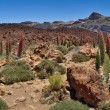 Photo: Panoramtenerife