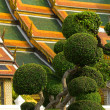 Roof with bonsai-trees — Stock Photo