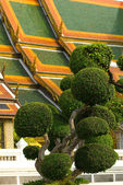Roof with bonsai-trees — 图库照片