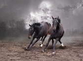Horses of a twilight — Stock Photo
