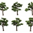Stock Photo: Bonsai pines