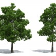 Stock Photo: Beech trees
