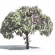 Money tree of Euro — Stock Photo