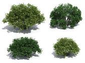 Krzewy — Zdjęcie stockowe