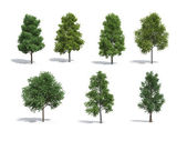 Group of trees — Stock Photo