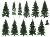 Fir trees — Stock Photo