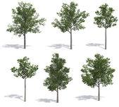 Lindebomen — Stockfoto
