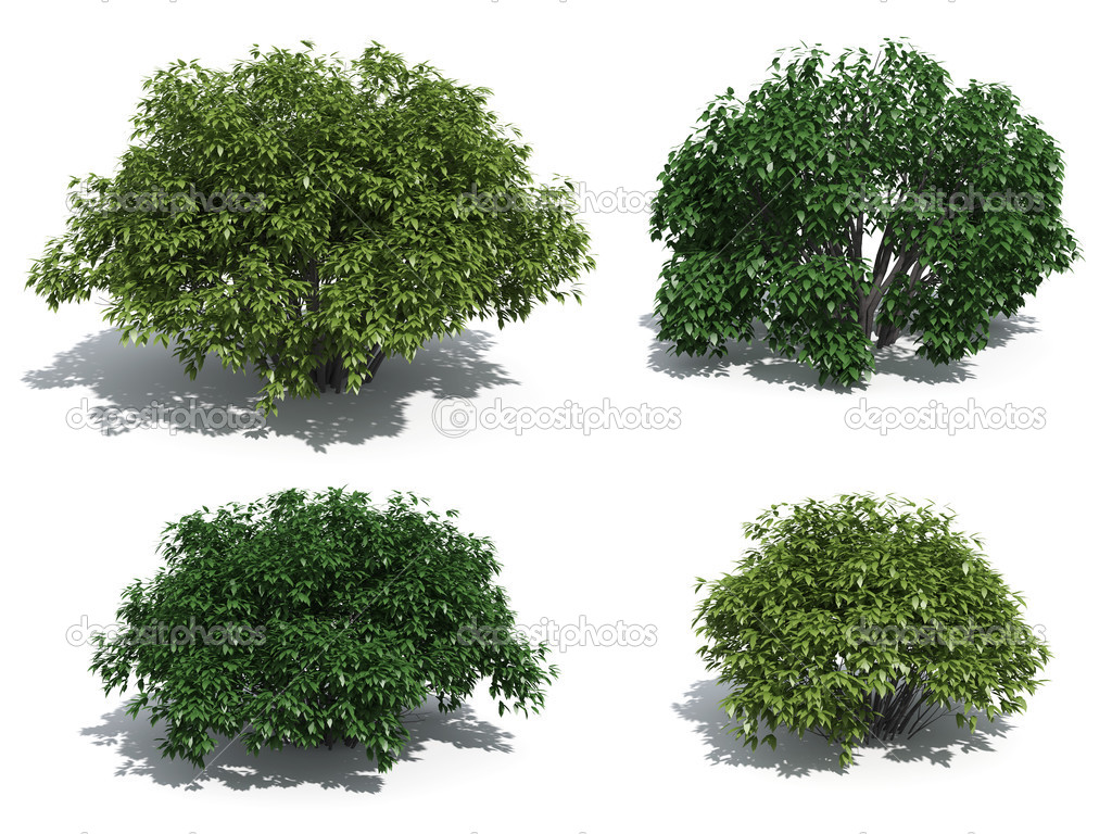Bushes isolated on white background — Stock Photo #2465002