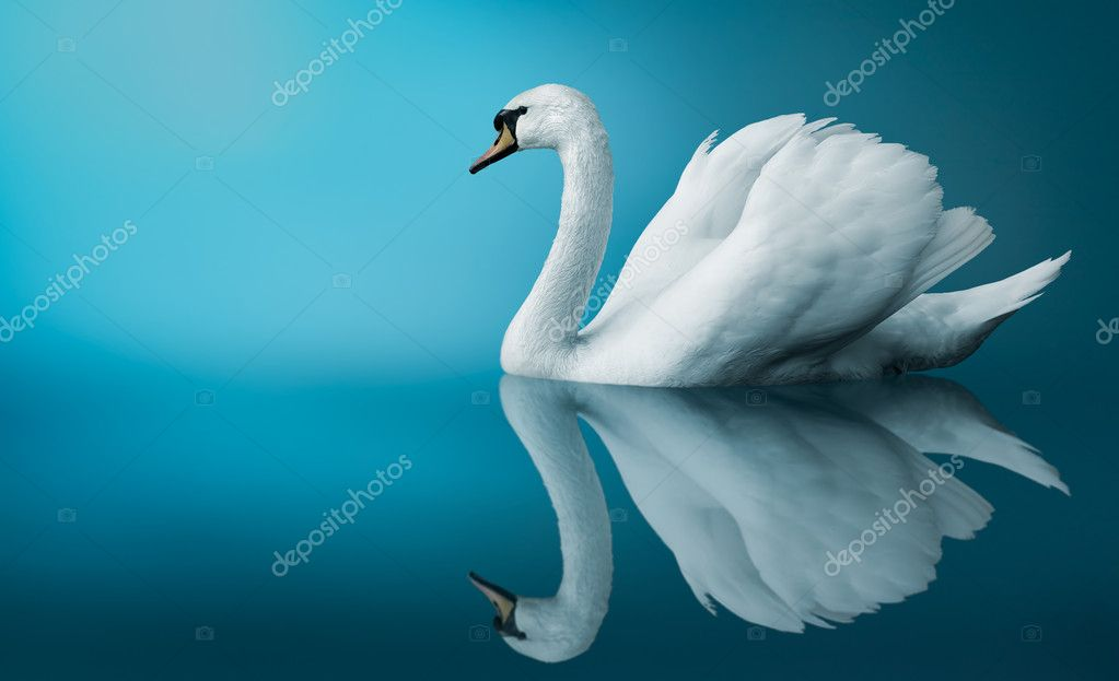 Fantastic swan  Stock Photo #2423297