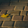 Stock Photo: Autumn leaf