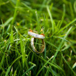Stock Photo: Wedding rings on grass
